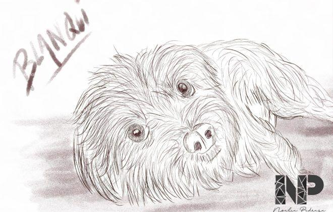 Ilustración perrita blanca Blanqui