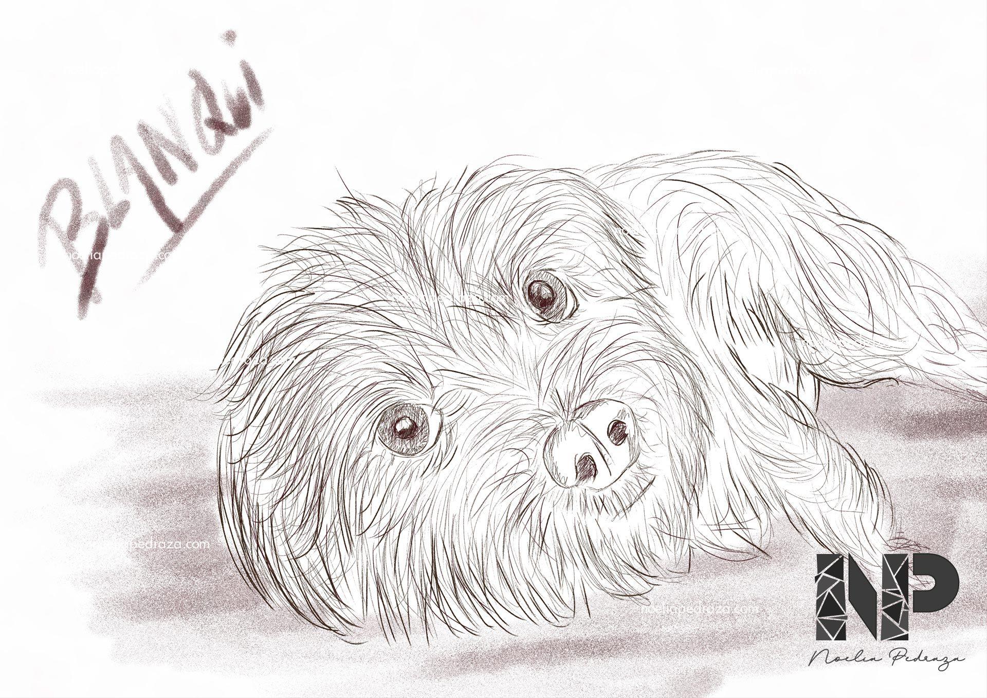 Dibujo o ilustración de perrito Blanqui Photoshop Illustrator